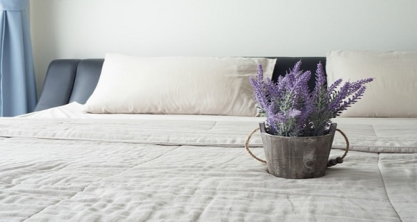 Jasmine and Lavender Are Among the 10 Best Plants Recommended by NASA for Better Sleep and Relaxation